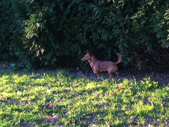 cão_lixa_1