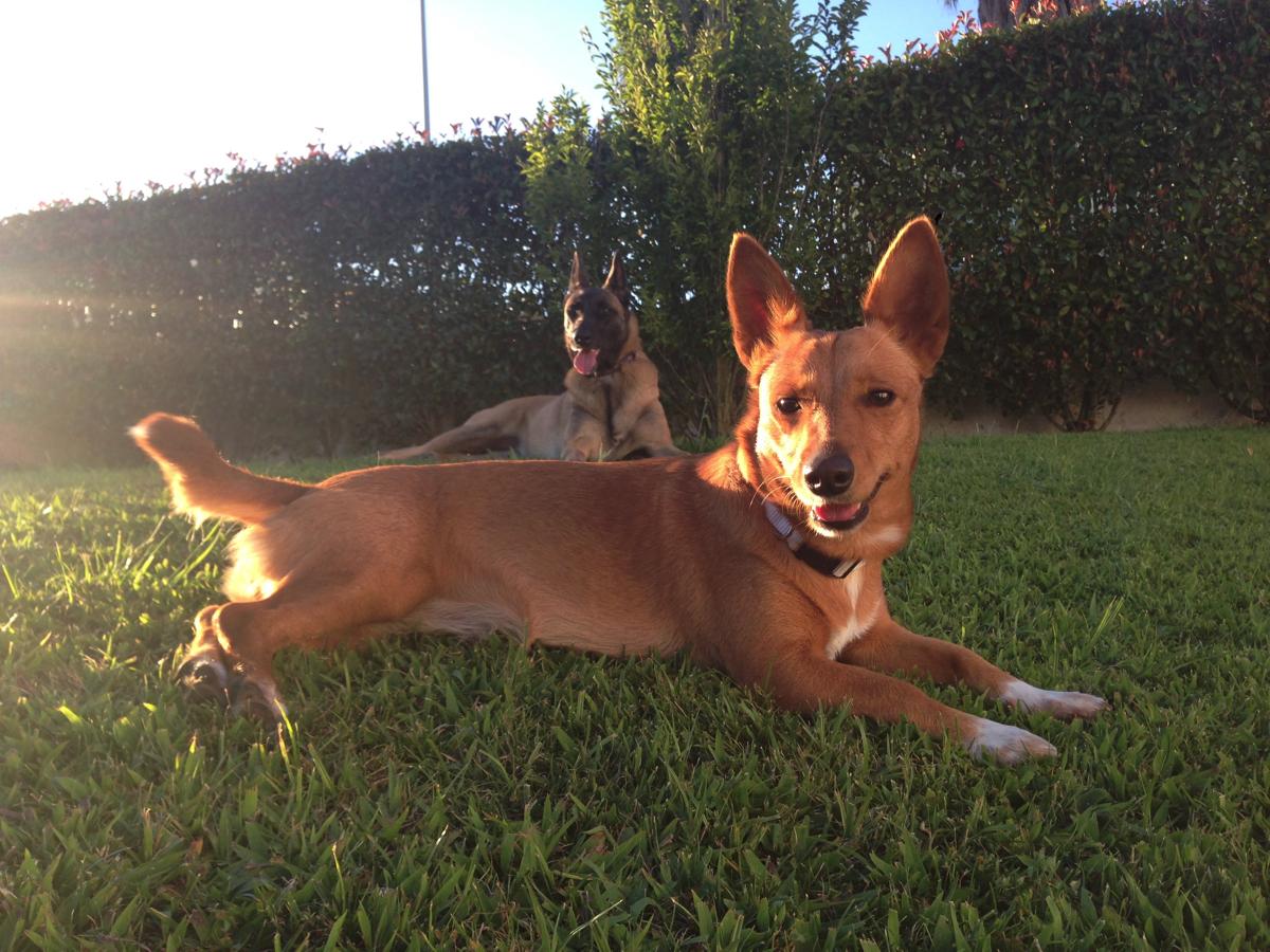 treino_de_cães