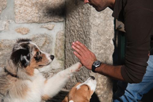 treino cães guimarães 1 a