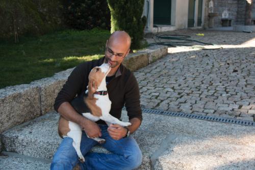 treino cães lixa 1 a