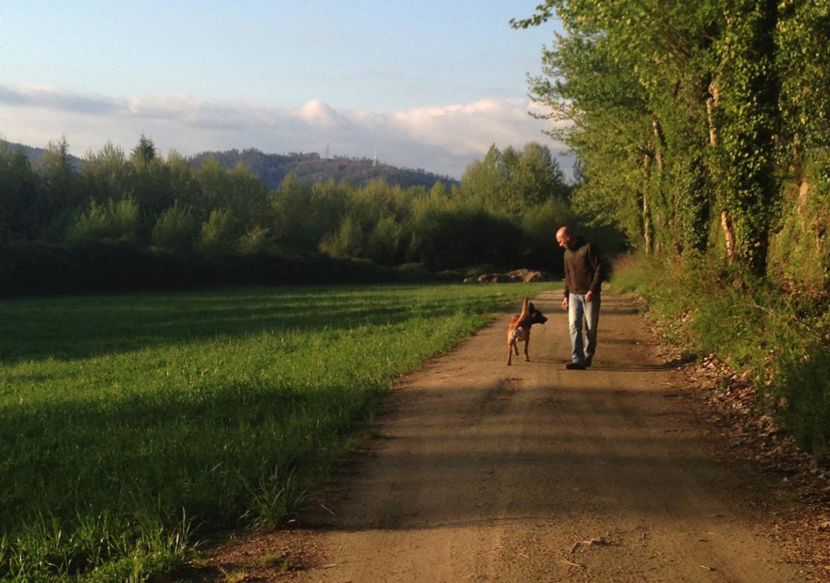 treino cão felgueiras pastor